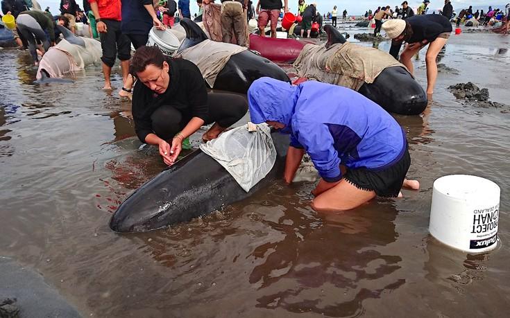 Νέα Ζηλανδία μαυροδέλφινα δελφίνια