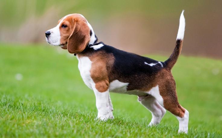 Σκύλος ράτσα σκύλου