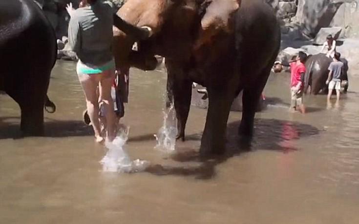 Ελέφαντας εκτοξεύει γυναίκα στον αέρα
