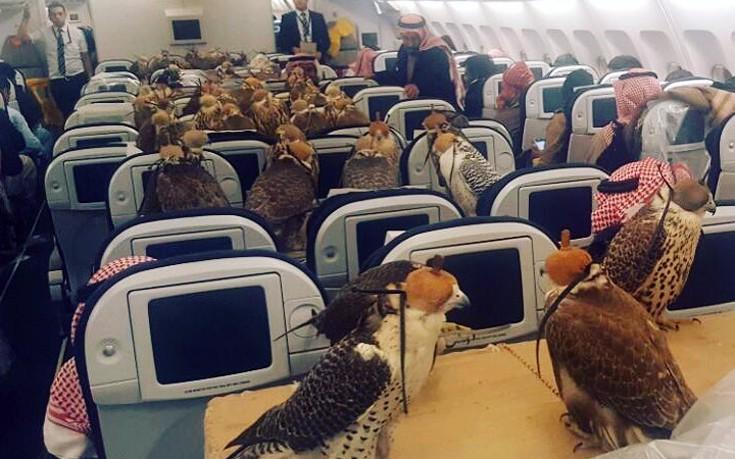 Τι κάνουν 80 γεράκια σε ένα αεροπλάνο;