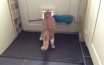 Γάτες σε περίεργες καταστάσεις