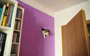 Γάτες είναι και κάνουν ό,τι θέλουν