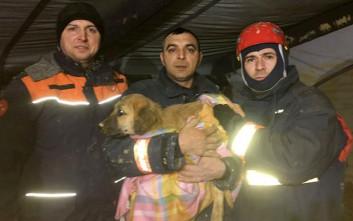 Η διάσωση κουταβιού στη Κωνσταντινούπολη που συγκινεί