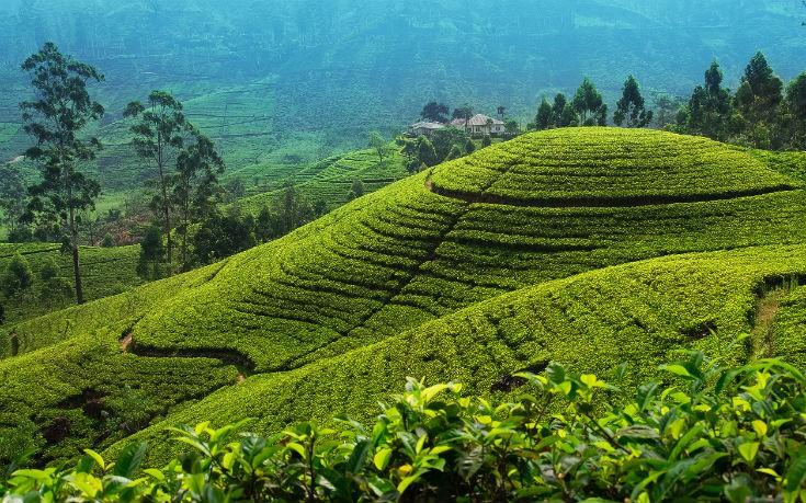 tea trails_edited
