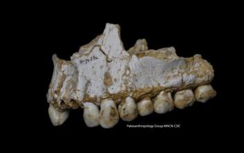 Ανακαλύφθηκε σε παιδικά δόντια 250.000 ετών η παλαιότερη έκθεση σε μόλυβδο