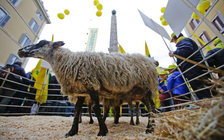 Διαμαρτυρία με πρόβατα στο κέντρο της Ρώμης