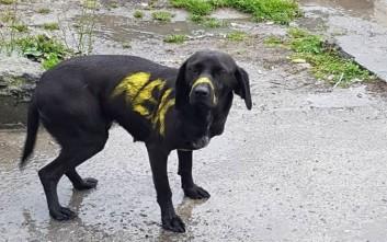 Τι απαντά η ΑΕΚ για τον σκύλο που έβαψαν με σπρέι