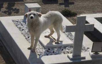 Σκυλίτσα περιμένει επί δύο μήνες στον τάφο του αφεντικού της