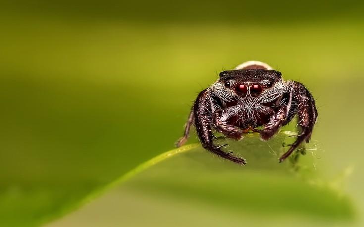 Οι αχόρταγες αράχνες και οι τόνοι εντόμων που καταναλώνουν κάθε χρόνο