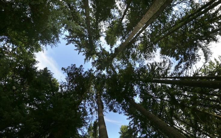 Ο ερημίτης που έζησε 27 χρόνια στο δάσος χωρίς κανένα σχέδιο