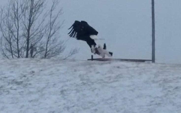 Το απίστευτο θήραμα του αετού