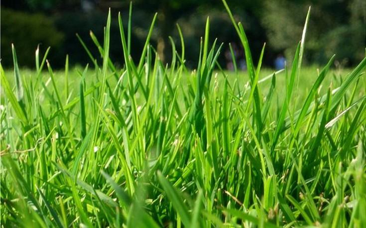 Φυτέψτε το γκαζόν και φροντίστε τον κήπο του σπιτιού σας