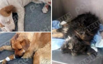 Σκυλιά με σφαίρες και σφυριές στο κεφάλι στην Ηλεία