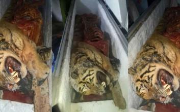 Βιετναμέζος έκρυβε στο ψυγείο του πέντε νεκρές τίγρεις