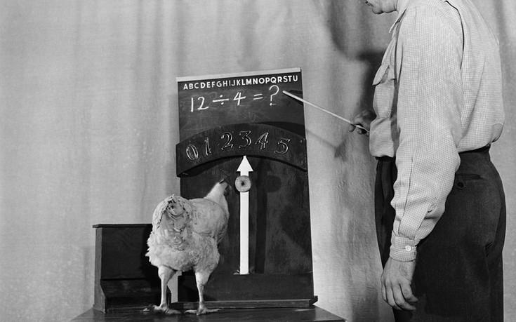 Ο πειραματικός ζωολογικός κήπος όπου τα κοτόπουλα μάθαιναν μαθηματικά και οι παπαγάλοι πατίνια!