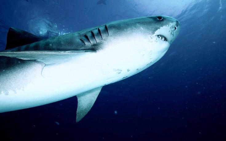 sharks12