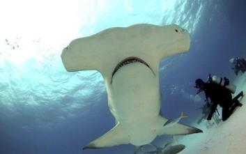 Κολυμπώντας με τους επιβλητικούς θηρευτές της θάλασσας