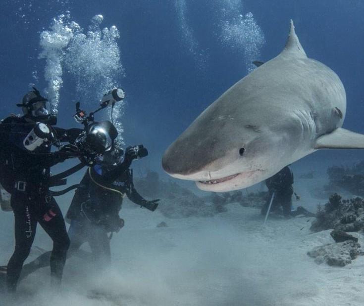 sharks4