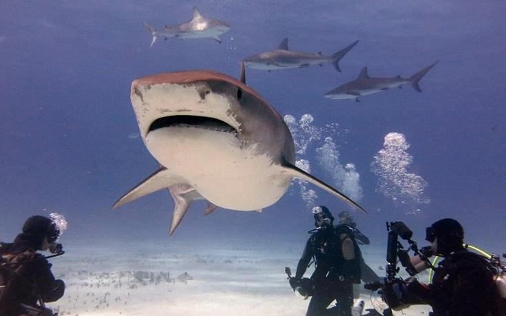 sharks5