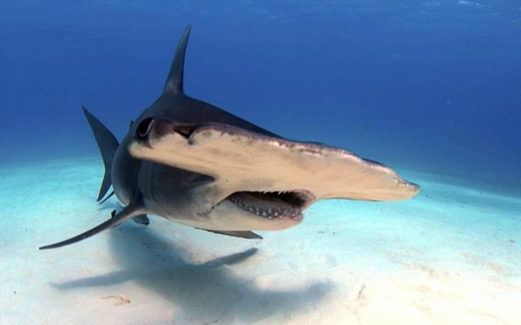 sharks8