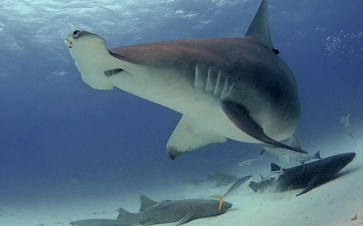 sharks9