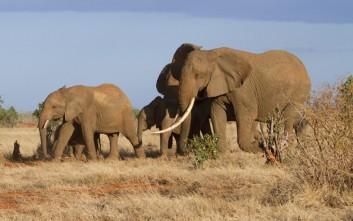 Τέλος στην πώληση άγριων ελεφάντων σε ζωολογικούς κήπους βάζει η CITES