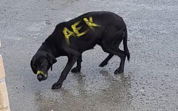 Έβαψαν σκύλο με σπρέι σε χρώματα ομάδας