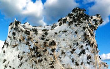 Οι αράχνες θα μπορούσαν να φάνε κάθε άνθρωπο στη Γη σε μόλις έναν χρόνο!