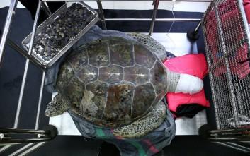Χελώνα έτρωγε τα τυχερά νομίσματα σε λίμνη της Ταϊλάνδης
