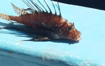 Ερασιτέχνης ψαράς έπιασε το επικίνδυνο λεοντόψαρο στο Ρέθυμνο