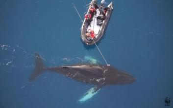 Η ζωή στην Ανταρκτική μέσα από τα μάτια μίας φάλαινας