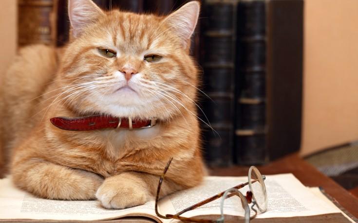 Η γάτα που συνυπέγραψε μια εργασία φυσικής το 1975