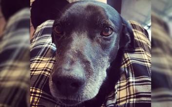 Γνωρίστε τον Άλφι, τον σκύλο του Κυριάκου Μητσοτάκη