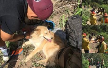 Σκύλος διασώθηκε από πηγάδι όπου παρέμεινε για τέσσερις ώρες