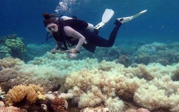 Μεγάλη ζημιά για δεύτερη χρονιά στον Μεγάλο Κοραλλιογενή Ύφαλο