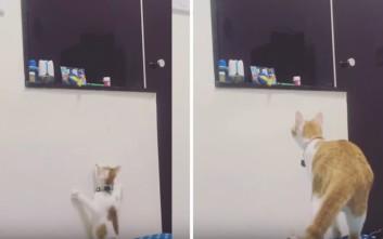 Η μαμά-γάτα βοηθάει το παιδί να πάρει πίσω το παιχνίδι του