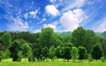 Πάνω από 60.000 είδη δέντρων μετρήθηκαν στη Γη