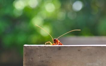 Τρεις τρόποι για να εξαφανίσετε τις κατσαρίδες από το σπίτι σας