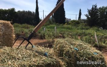 Το χωράφι στο Μαρούσι που ταΐζει καθημερινά 50 οικογένειες