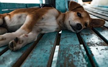 Τι μπορεί να κάνει κανείς αν αντιληφθεί ότι ένα ζώο κακοποιείται