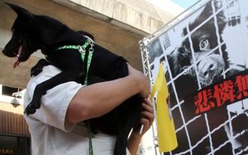 Εκτός νόμου η κατανάλωση κρέατος σκύλου και γάτας στην Ταϊβάν