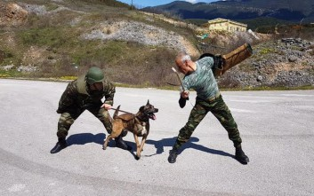 Οι εντυπωσιακοί σκύλοι «μαχητές» του ελληνικού Στρατού