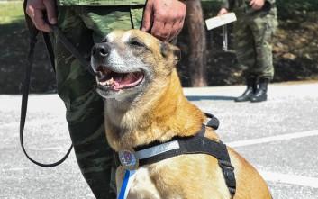 Οι Ένοπλες Δυνάμεις βράβευσαν σκυλίτσα που γέννησε 43 επίλεκτα κουτάβια