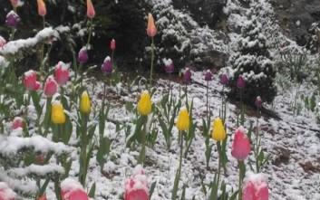 Ανοιξιάτικη... χιονόπτωση στα Καλάβρυτα