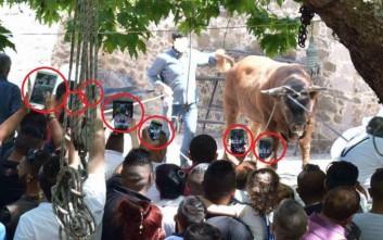 Έντονες αντιδράσεις για το έθιμο της σφαγής του ταύρου στη Λέσβο