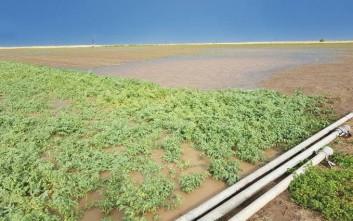 Καταστράφηκαν χιλιάδες στρέμματα καλλιεργειών από τις νεροποντές