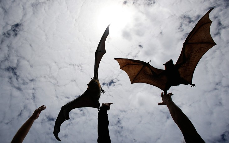 Οι νυχτερίδες που επιστρέφουν πάντα σε ένα συγκεκριμένο σπίτι του Σαν Αντόνιο