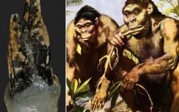 Τι εννοούμε με τα απολιθωμένα