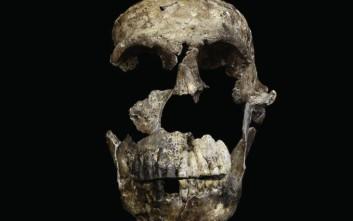 Ο σκελετός ενός ακόμα συγγενή του ανθρώπου ανακαλύφθηκε στη Ν. Αφρική