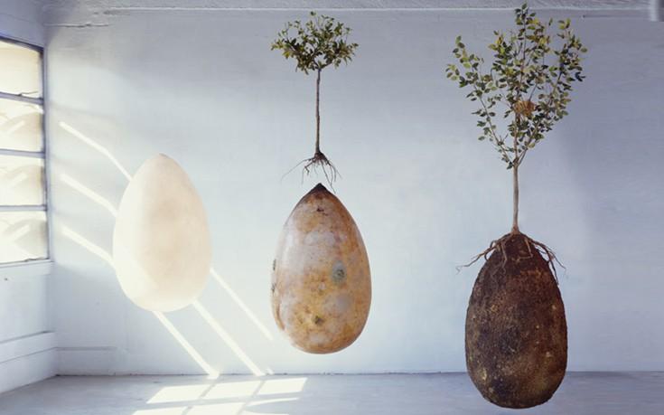 Νέα πατέντα δίνει τη δυνατότητα να γίνετε δέντρο μετά τον θάνατό σας
